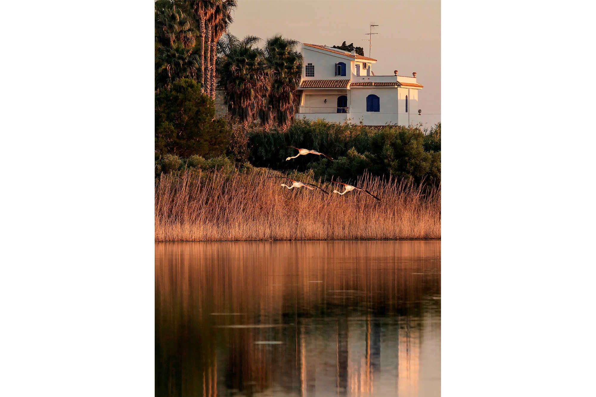 Le Saline B&B Siracusa: b&B view with flamingos from the salt marshes